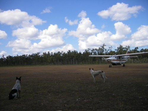 Tjirrikitj and Bilimbil watching the local service provider plane arrive.