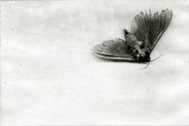 moth_etching