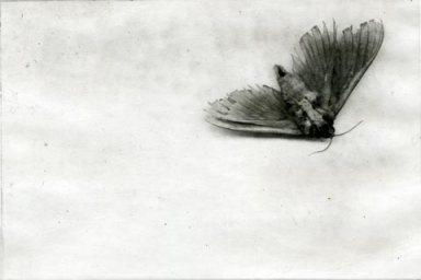 moth_etching