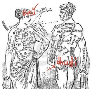 YMmedical-anotomical-vintage-diagram-illustration-17616617
