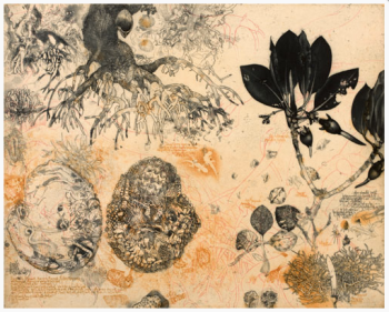 Jörg Schmeisser. Mangrove and Notes, Etching, 2010.