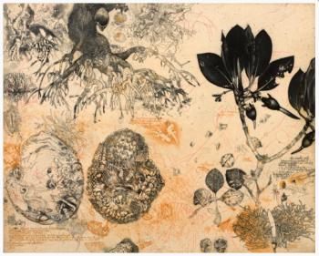 Jörg Schmeisser. Mangrove and Notes, Etching, 2010.