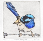 lydie-paton-superb-fairywren-bluethumb-6b79